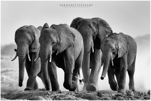 Nxai Pan Elephants