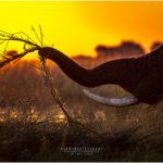 Chobe - Botswana