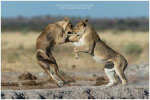Nxai Pans - Botswana